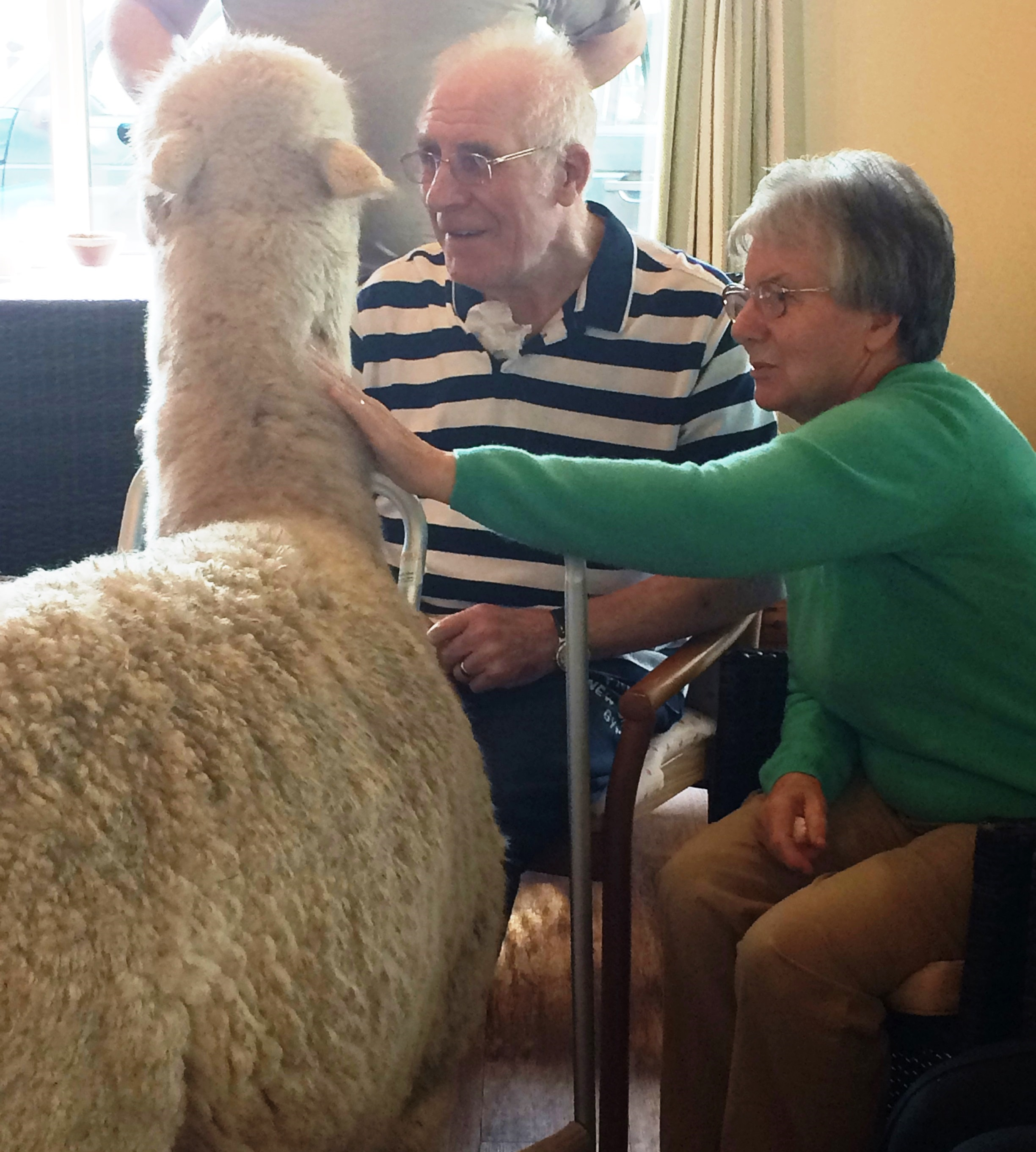 /media/news/library/arthur-and-margaret-and-alpaca.jpg